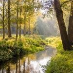 Bomen en hun verhaal