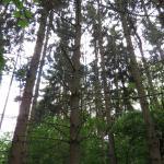 Bomenwandeling in Tösch Langeren