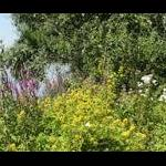 Plantenwandeling: Koningssteen