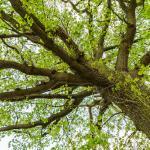 Bomenwandeling