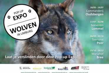 Bezoek Expo 'Wolven in Limburg' met Verkenner