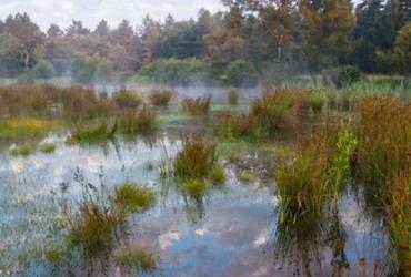 Natuurpunt roept Kempen~Broek uit tot natuurgebied van de maand