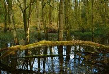 Grensmoeras Wijffelterbroek-Kettingdijk werkt straks als een klimaatbuffer!